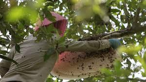 Mật Ong hoa rừng Đà Lạt