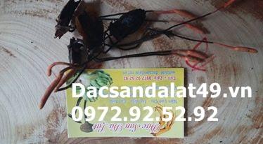 14657453_342982899379958_9081131996455417333_n