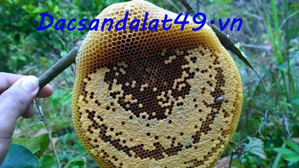 Mật ong Đà Lạt | Mật ong rừng