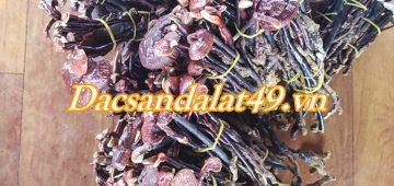 Cách phân biệt nấm linh chi rừng với nấm linh chi trồng