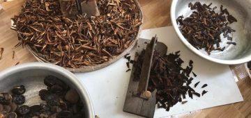 Tác dụng của nấm linh chi rừng đà lạt