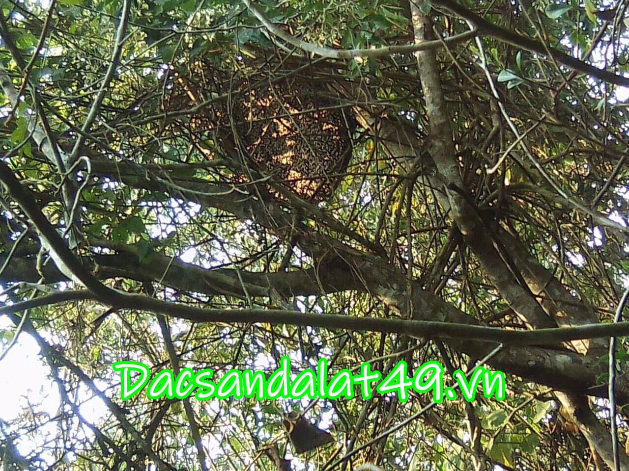 Đặc sản đà lạt mật ong rừng
