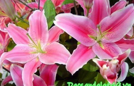 Hoa tươi đà lạt giá sỉ tại vườn