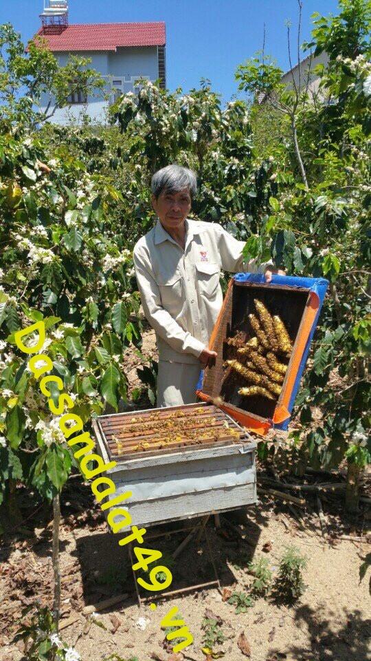 Mật ong hoa cà phê đà lạt