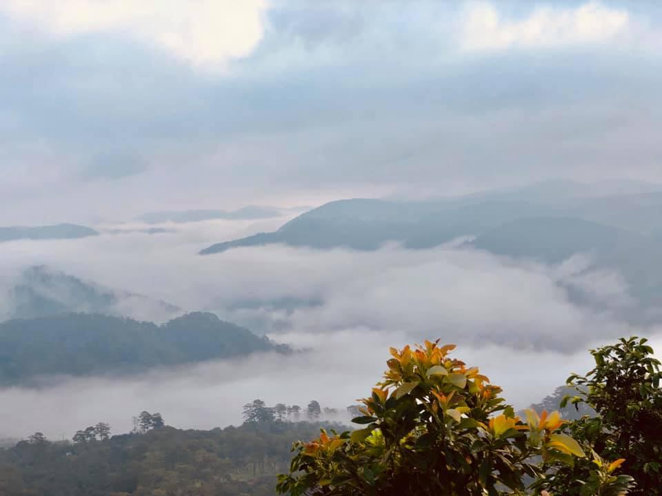 Vài lưu ý cho bạn nào đi săn mây tại đồi chè Cầu Đất Đà Lạt