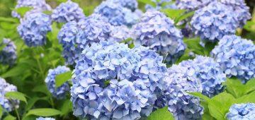Top 5 loài hoa tươi đà lạt đang được yêu thích