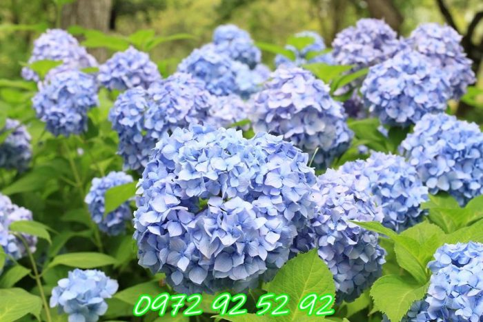 Top 5 loài hoa tươi tại đà lạt đang được yêu thích