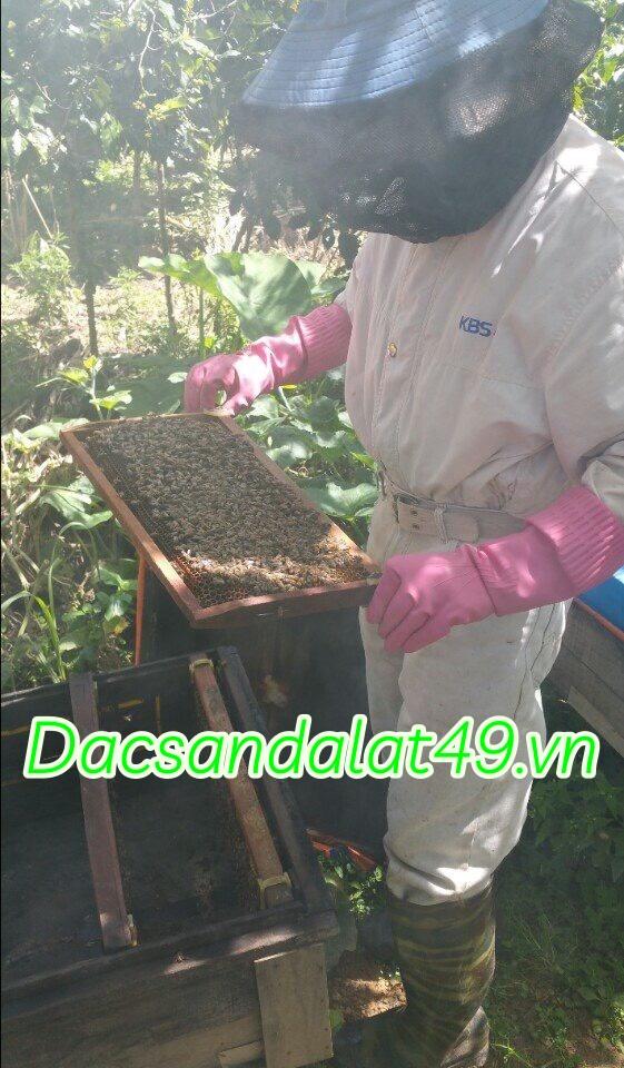 Mật ong nuôi vườn hoa cà phê tại đà lạt