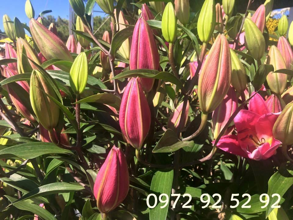 Chuyên cung cấp các loại hoa đà lạt tết 2020