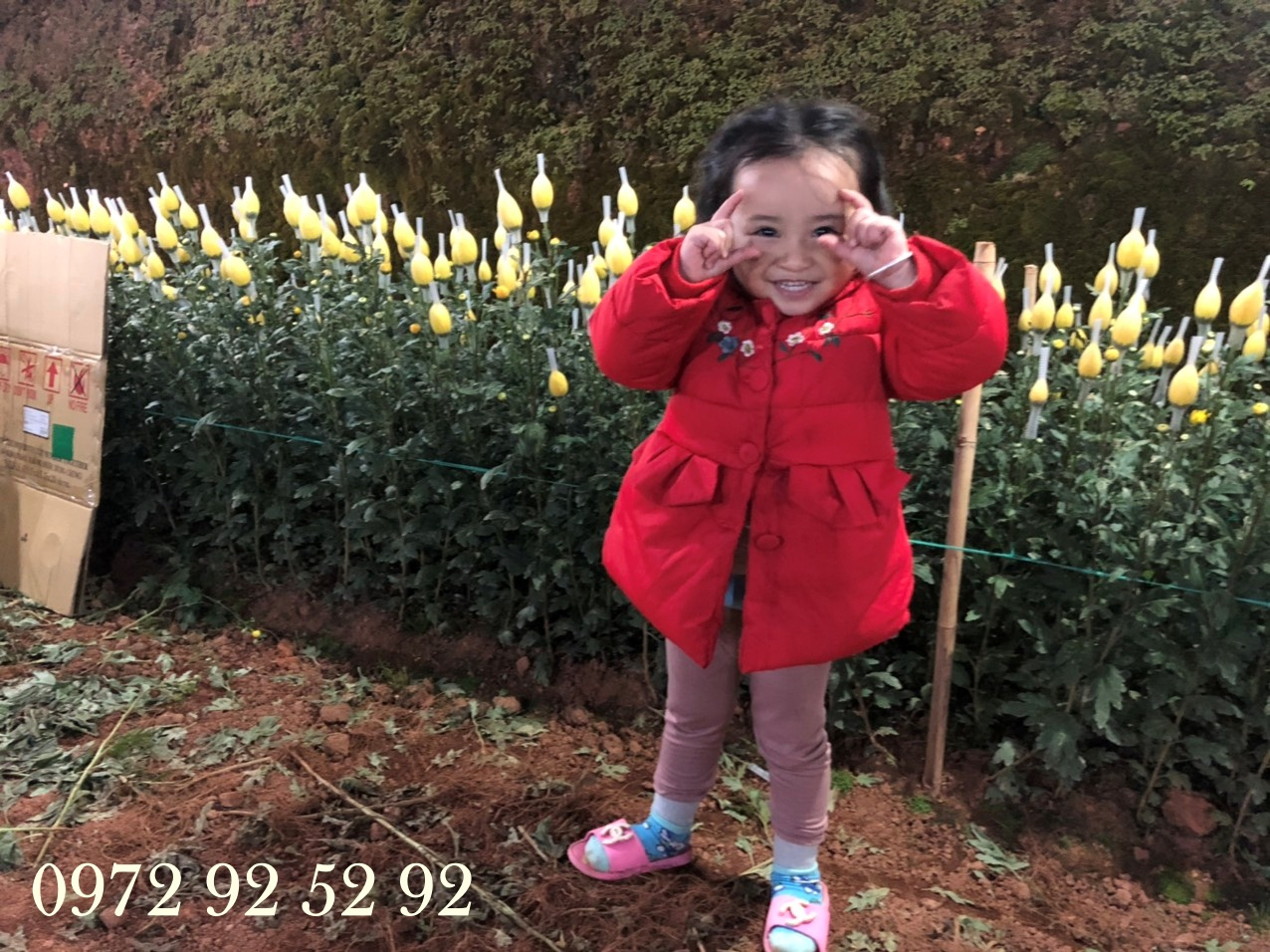 Kinh nghiệm bán hoa đà lạt tết 2020