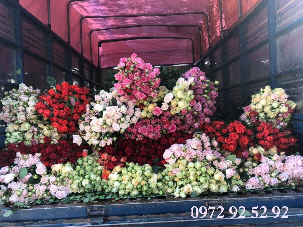 Hoa hồng đà lạt – Hoa hồng đà lạt giá sỉ tại vườn
