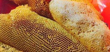 Mật ong rừng đà lạt và cách nhận biết