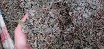 Chè dây rừng đà lạt – Đặc sản rừng đà lạt