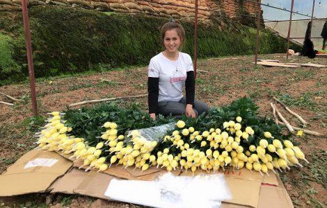 Hoa cúc vàng – Hoa cúc đà lạt giá sỉ