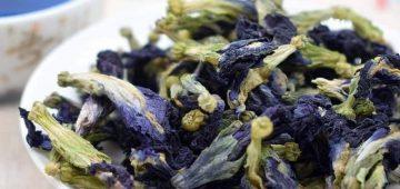 Tác dụng của trà hoa đậu biếc