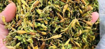 Cách chữa 46 loại bệnh tật bằng hoa đu đủ