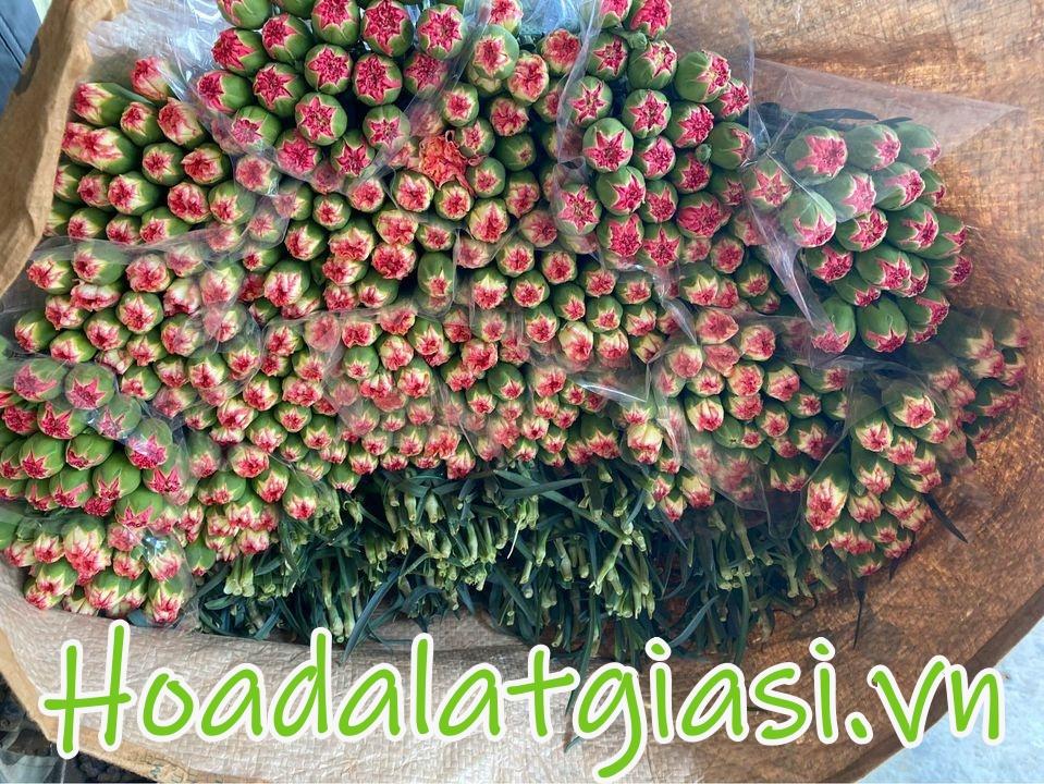 Hoa cẩm chướng đà lạt tết 2022 giá sỉ tại vườn